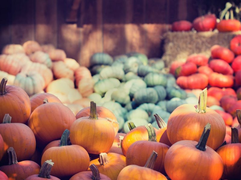 pumpkin farms, making money with kijiji, sell online in vancouver, kijiji,